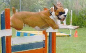 Faline Jumping-0510-1