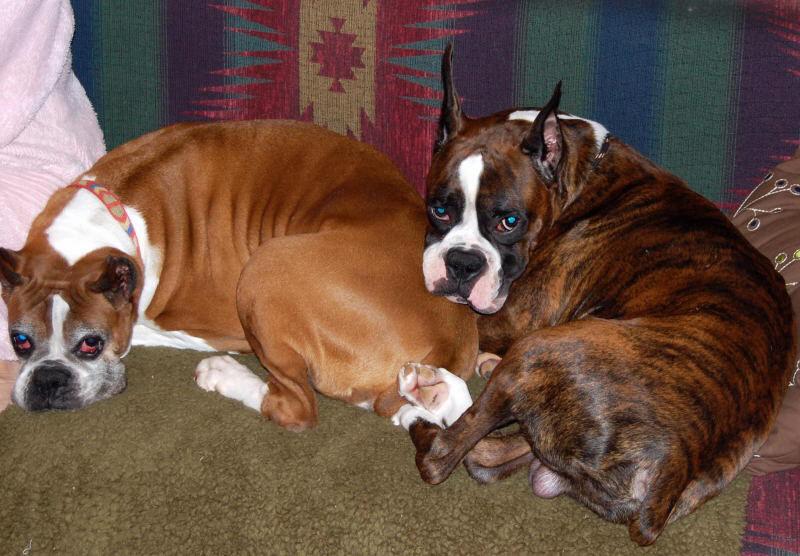 Jango and Lexi on sofa20090206065420